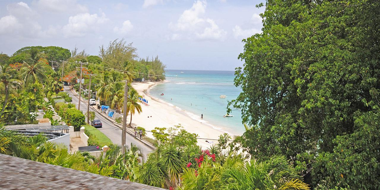 Palm, Beacon Hill, Mullins, Barbados